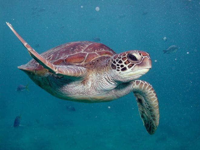 sunlovercruises_turtle
